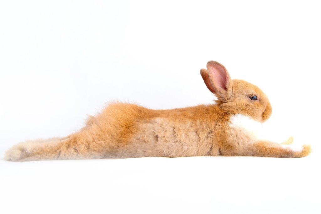 Très Spa Bunny Flop