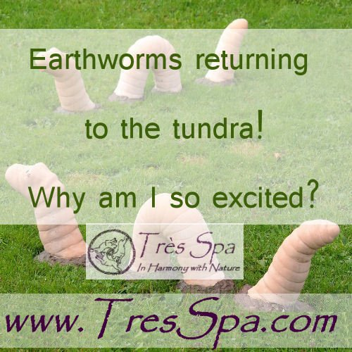 Earthworms returning to the tundra!